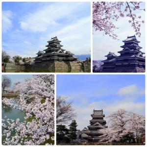 松本城桜150409